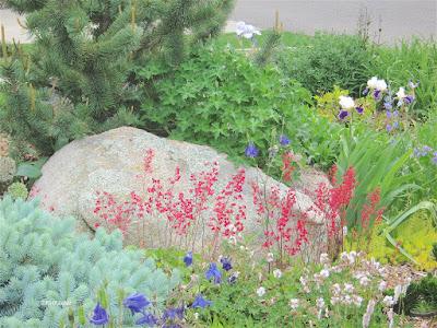 rock garden, Fort Collins, CO