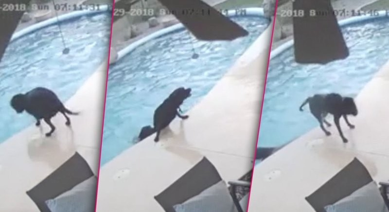 Σκύλος βοηθάει τον φίλο του να βγει από την πισίνα! (βίντεο)
