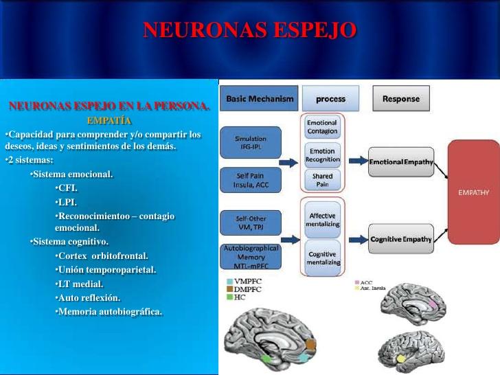 Aplica la psicolog a a tu vida neuronas espejo infograf a for Espejo unidireccional psicologia