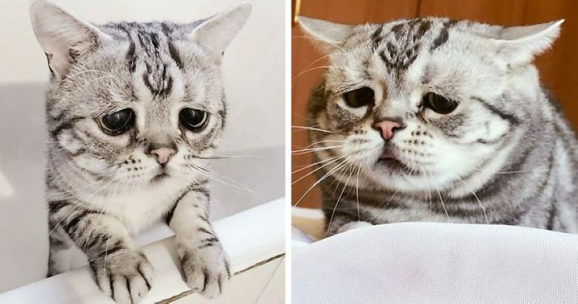 The World's Cutest and Saddest Cat Luhu Whose Adorable Pictures Will Break Your Heart