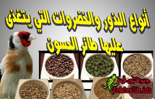 انواع البذور والخضروات التي يتغذى عليها الحسون