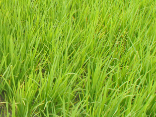 World Bank affirms $210 million credit for West Bengal's gram panchayat advancement