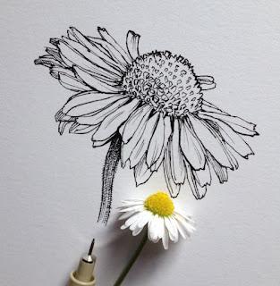 Kumpulan Sketsa Gambar Bermacam Jenis Bunga