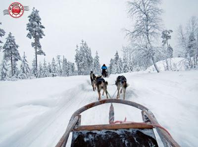 Trineo de huskies en Laponia Finlandesa