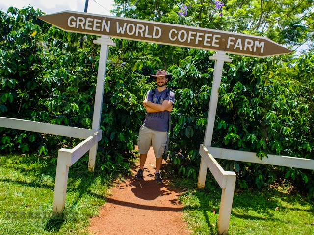 Fancy coffee? Take a stroll through Green World Coffee's coffee garden after you have a cup