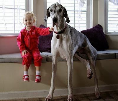 niña con su perro gigante