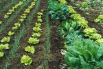 Las características que distinguen la agricultura ecológica