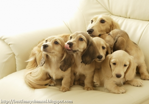 Many cute puppies.