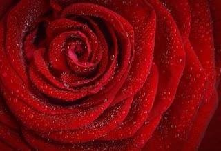 Puisi Cinta Aku Kau dan Hujan Karya Azzimah