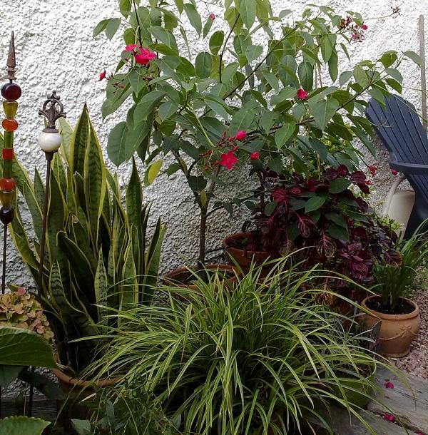 rincón con plantas