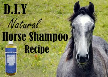 DIY Natural Horse Shampoo Recipe