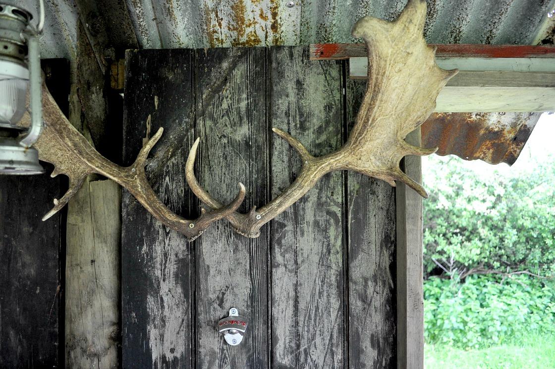 Canopy & Stars, glamping, nature, safari, Knepp Wildland Safari, deer antlers
