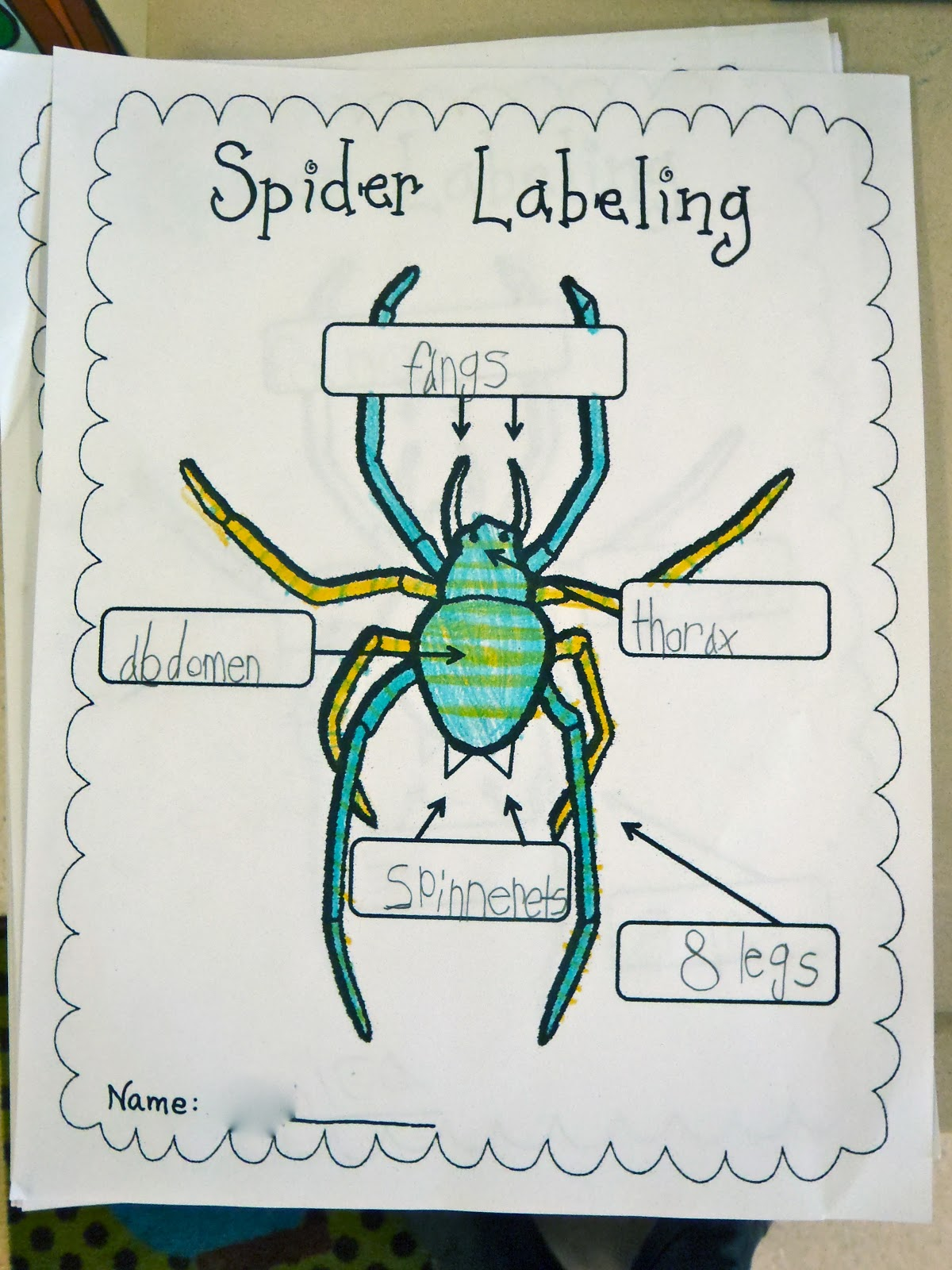 Fun With Firsties Spiders Aren T Insects