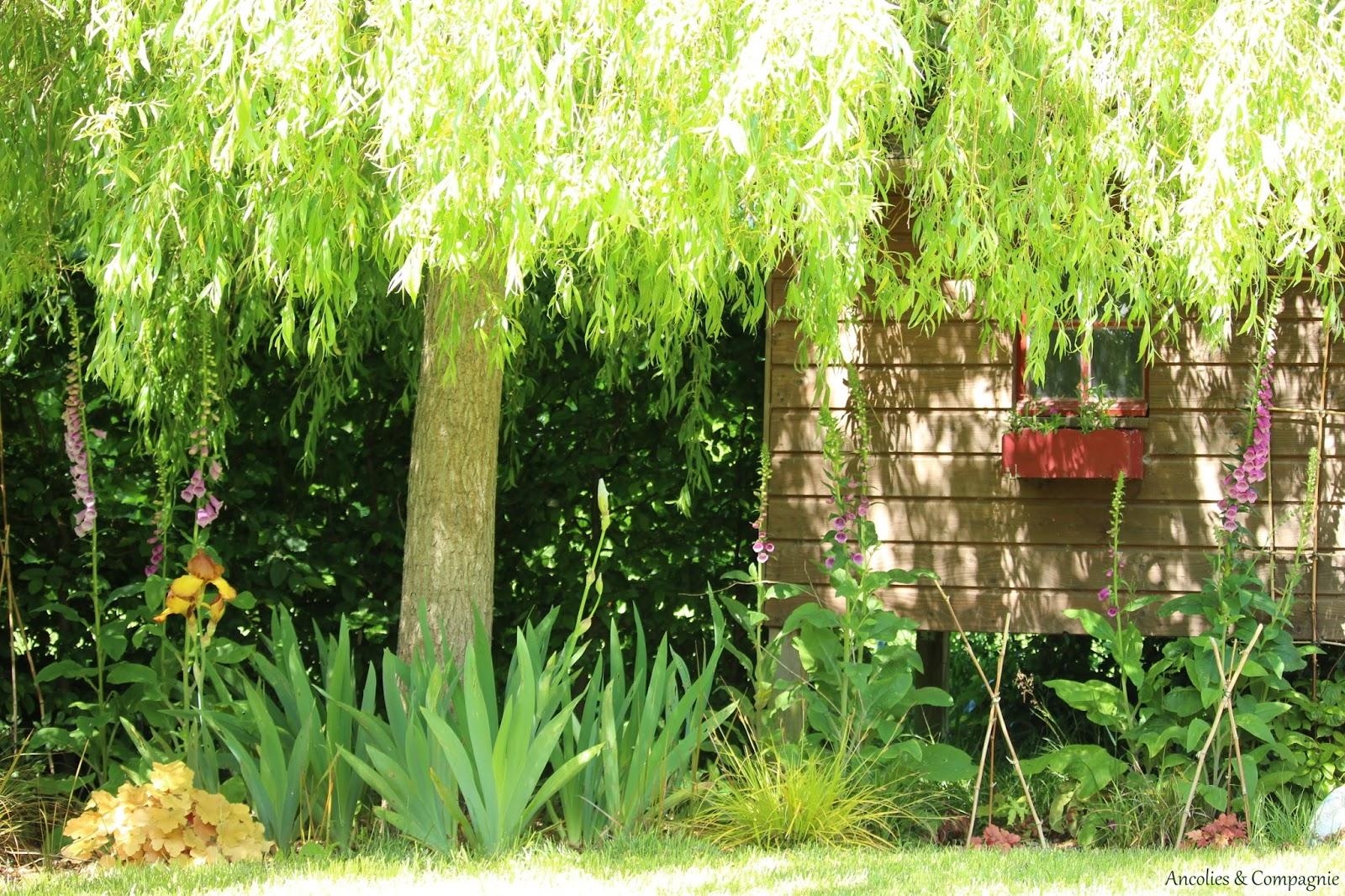 Ancolies compagnie un regard sur le jardin fin mai for Le jardin neufchatel sur aisne