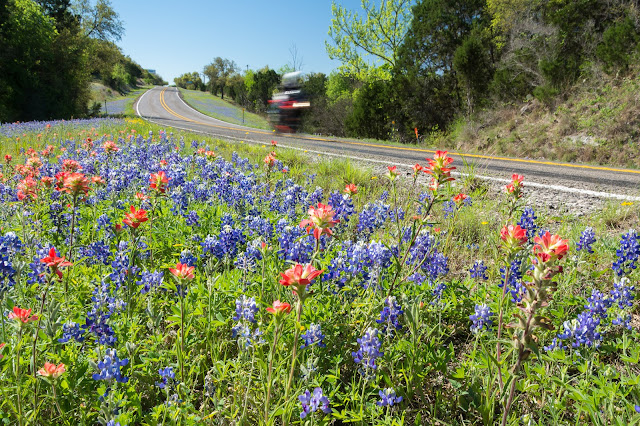 Bluebonnets and Indian Paintbrush, FM 1431