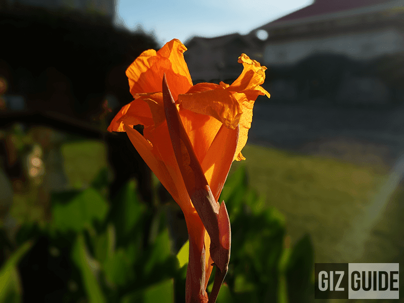 Great flower shot in DOF mode