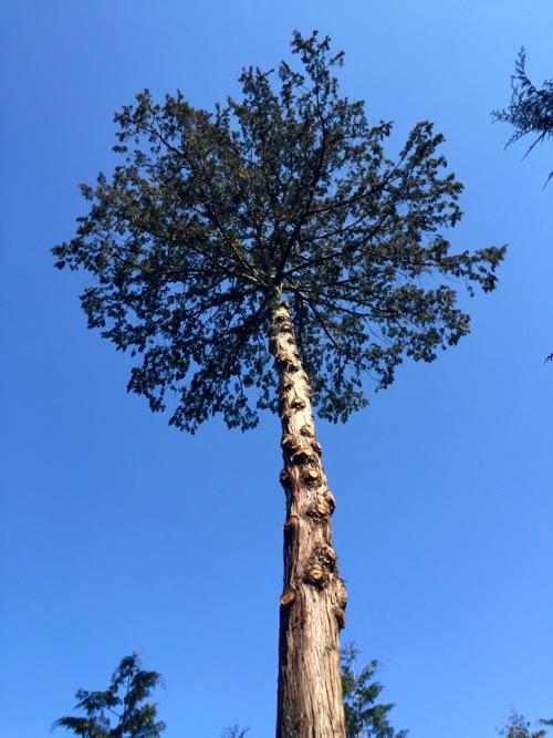 埼玉トラック協会が守っている木