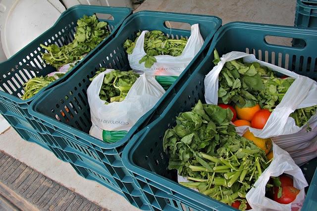 Em Maio e Junho você pode trocar lixo reciclável por legumes e verduras: Confira o Calendário