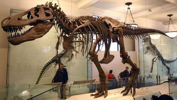 Recrean versión más precisa de Tiranosaurio Rex para videojuego