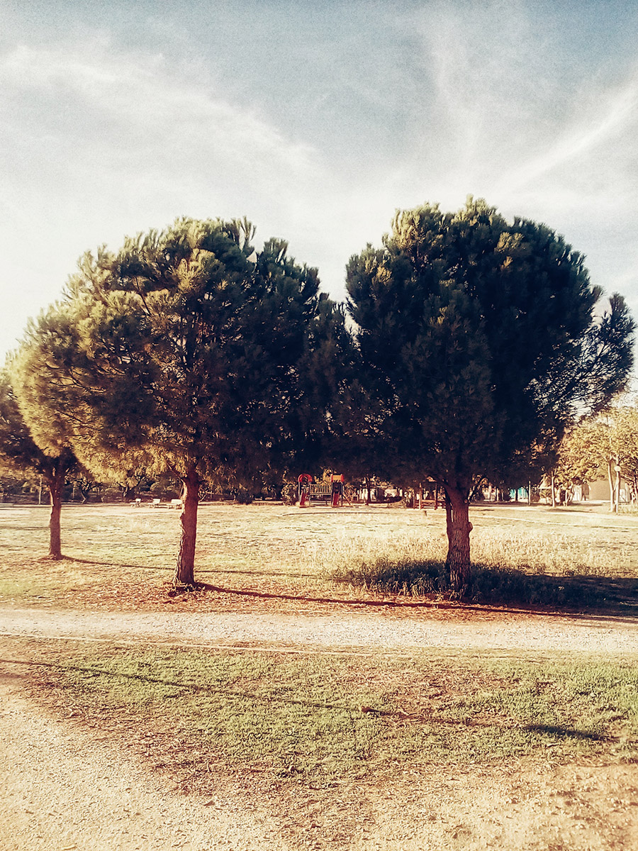 'Two' an original photo by Artist Kostas Gogas, depicting two rounded trees side by side on a sunny day on top of a yellowish ground. All colors are a bit washed out.