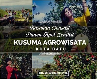 Kusuma Agrowisata Petik Apel Batu Malang