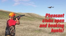 california pheasand club and hunting on private ranches for wild pheasants, how to hunt california