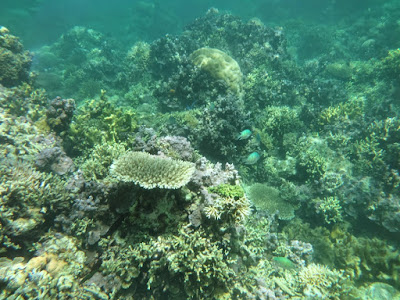 Keindahan bawah laut pulau sapeken