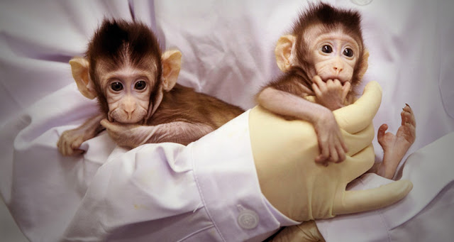 First Primate Clones - Human cloning will also be a reality