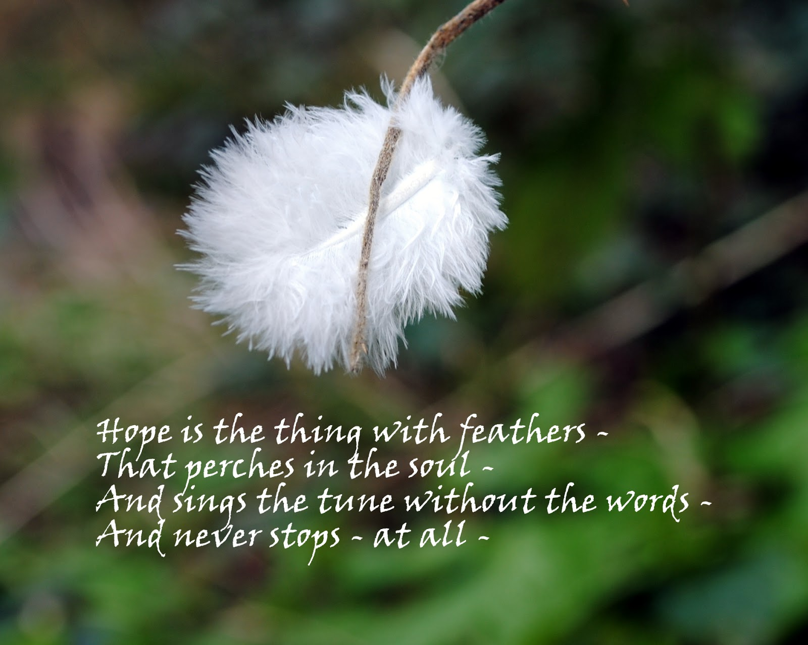 """hope with the feathers The last poem i loved: """"'hope' is the thing with feathers"""" by emily dickinson by alexa dooseman november 25th, 2014  """"hope"""" is the thing with."""