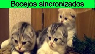 http://www.calangodocerrado.net/2017/05/vai-agora-so-falta-voce.html