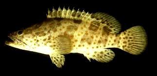 A R B E T A Budidaya Ikan Kerapuh Air Tawar