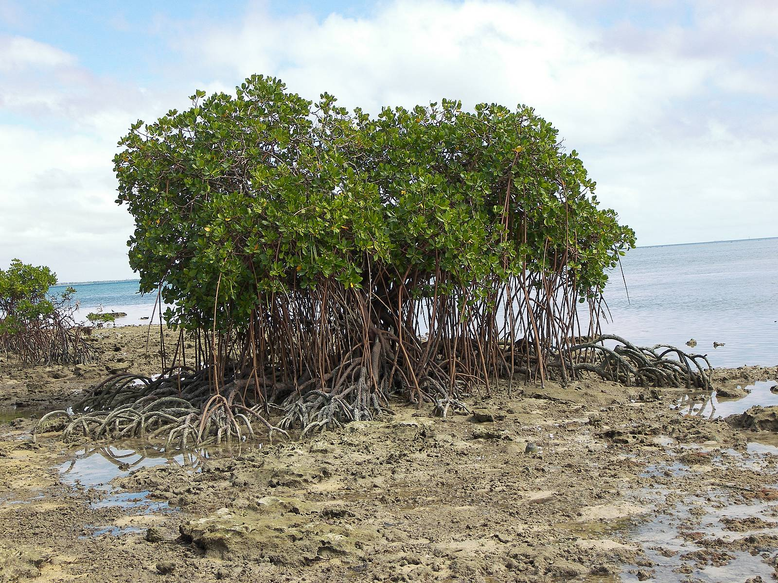 Hd Wallpapers Mangrove Tree Hd Wallpapers