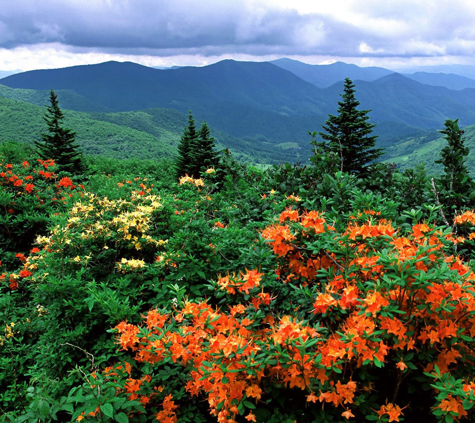 Beautiful Flower For Wallpaper: Flowers For Flower Lovers.: Beautiful Flowers Sceneries