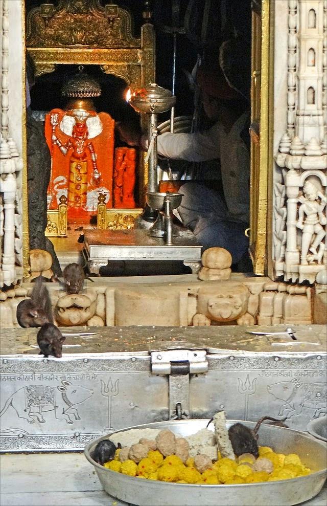 1. बीकानेर, करनी माता मंदिर (Karni Mata Temple, Bikaner)