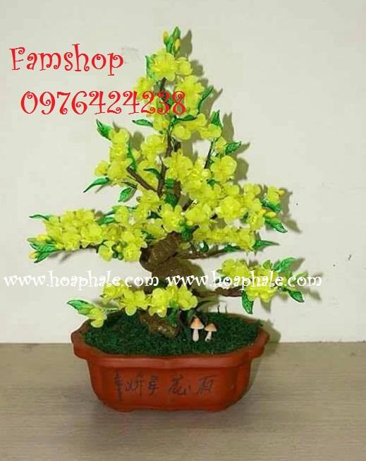 Goc bonsai cay hoa mai o Nguyen Chanh