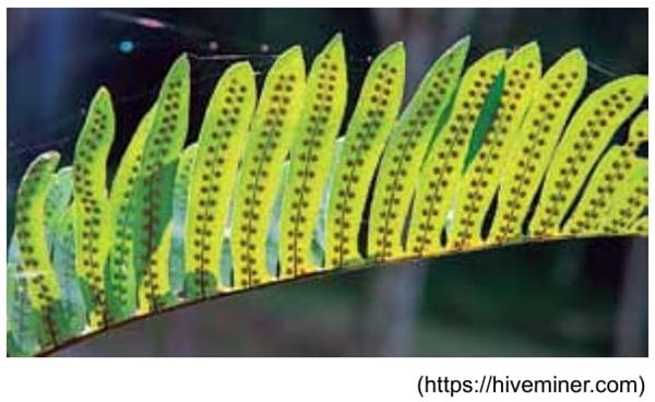 A figura mostra detalhes da folha de uma planta