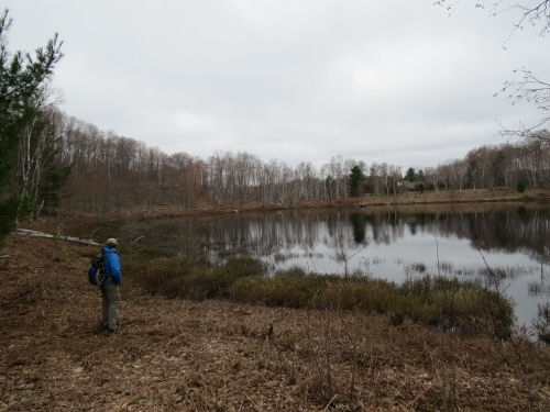 McNeal Pond