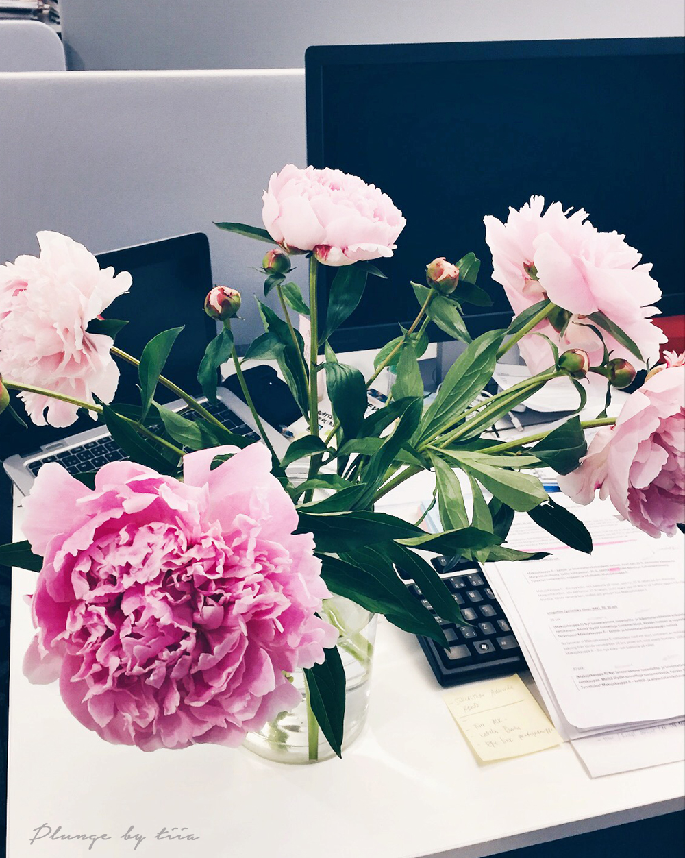 Pionies on my work desk - Plunge by tiia