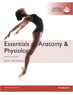 Essentials of Anatomy & Physiology 7th Edition