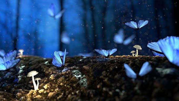 La farfalla e il lampione. Un #racconto