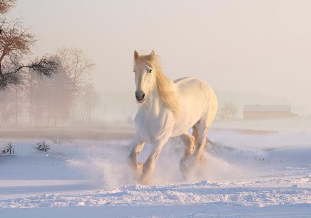 Pferdehörspiele von Audible