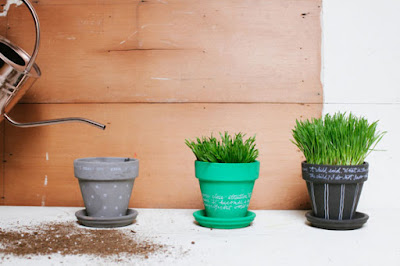 pots, grass pots, garden pots, diy home decor, diy projects, do it yourself projects, diy, diy crafts, diy craft ideas, diy home, diy decor