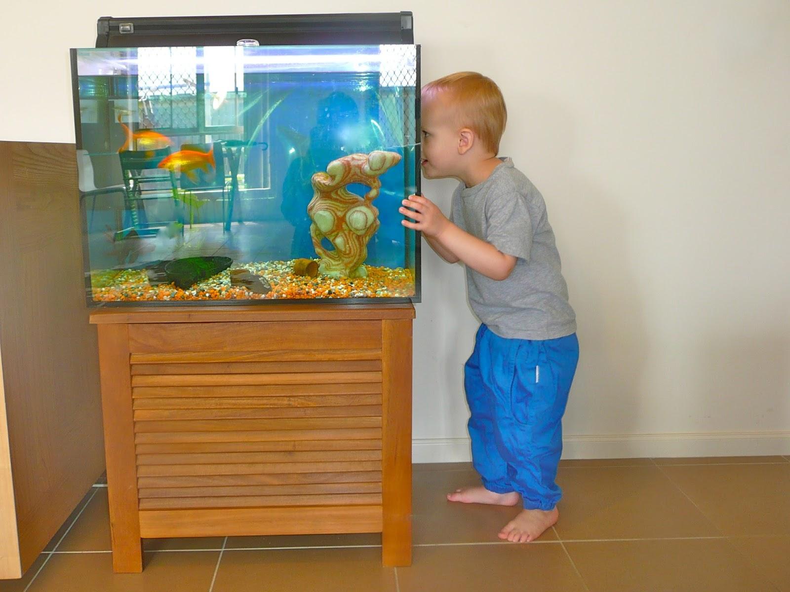 các bé hay dí sát mặt vào bể thủy sinh
