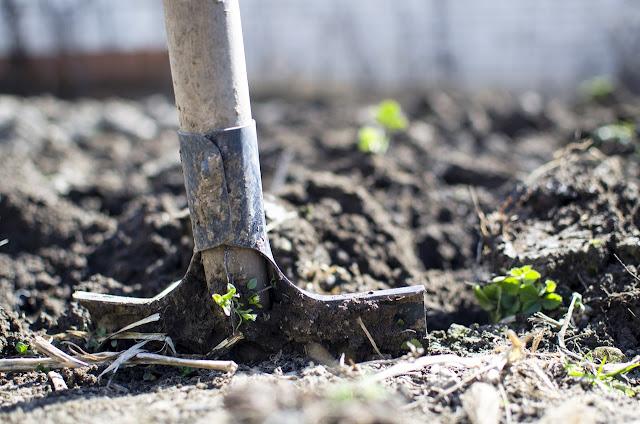 Shovel inside soil, gardening, garden, farm