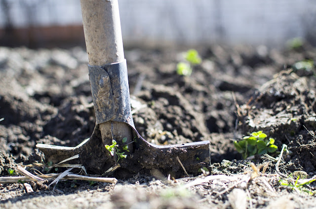 Shovel in the soil, gardening and farming, garden