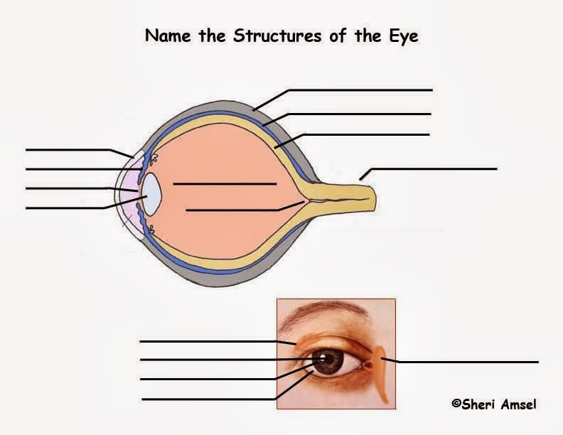 Old fashioned eye parts images human anatomy images the biologs csec the eye functions of the various parts ccuart Gallery