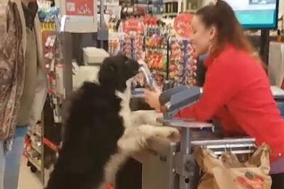 Σκύλος ψωνίζει όσα θέλει από το σούπερ μάρκετ και… πληρώνει στο τέλος