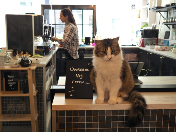 kuroneko cat cafe