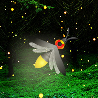 Play Games2Rule Fireflies Night Forest Escape