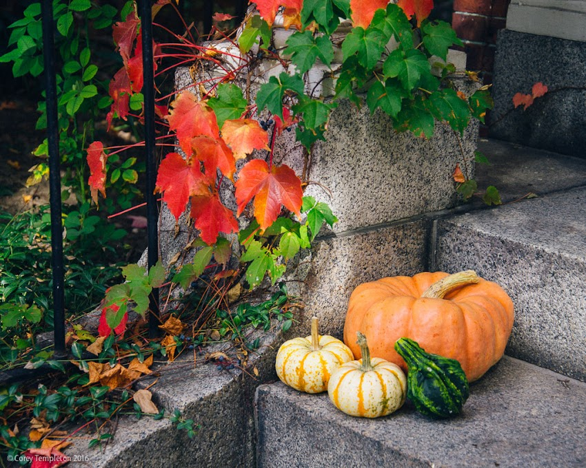Portland, Maine USA October 2016 photo by Corey Templeton. A little bit of autumn on the steps of Portland Magazine's headquarters on State Street.